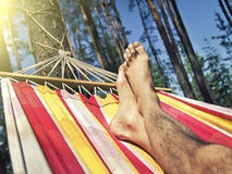 Feet in the hammock on a background of pine forest Stock Photos