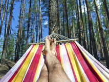 Feet in the hammock on a background of pine forest Royalty Free Stock Photos