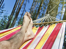 Feet in the hammock on a background of pine forest Royalty Free Stock Image