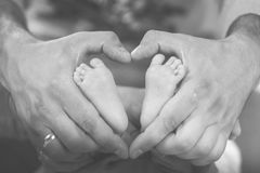 Feet in hands. Little newborn feet in parent hands Stock Images