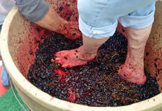 Feet and hands stomping grapes royalty free stock image