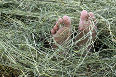 Feet in hay Royalty Free Stock Image