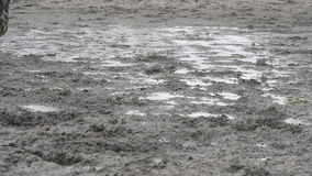 Feet of horse running on mud. Close-up of legs of stallion jogging at the wet muddy ground. Close up of paws galloping stock footage