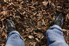 Feet on leaves. Feet in training shoes on fallen leaves Stock Photo