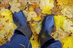 The feet of the man in rubber boots for the autumn foliage Royalty Free Stock Images