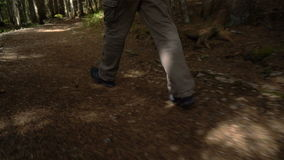Feet of a man walking along a path. Through the forest stock video