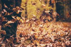 Feet Man walking Outdoor with fall leaves Royalty Free Stock Photos