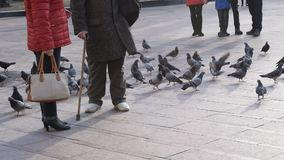 Feet of old man with walking stick feeding pigeons stock video