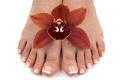 Feet and Orchid. Pedicured feet with beautiful fresh orchid Royalty Free Stock Photo