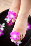 Feet in orchid spa bowl Stock Image