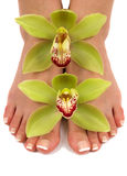 Feet and Orchids. Pedicured feet with beautiful fresh orchids Stock Photos