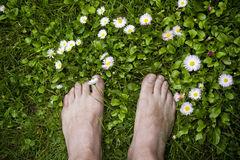 Feet over grass. Feet on the soft grass with daisies Stock Images