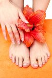 Feet with pedicure Stock Photography