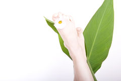 Feet with petals Royalty Free Stock Photos