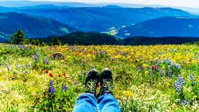 Feet resting in a field of wildflowers royalty free stock images