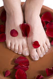 Feet in rose Stock Image
