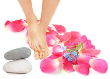 Feet and rose Stock Images