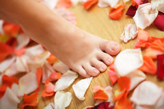 Feet and rose petals Stock Images