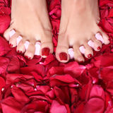 Feet and rose-petals stock image