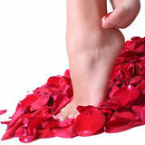 Feet and rose-petals Stock Images