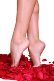 Feet and rose-petals Royalty Free Stock Photo