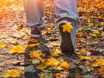 Feet shoes walking in nature, autumn, leaves, legs and shoes. Royalty Free Stock Photo