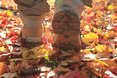 Feet in shoes yellow leaves Stock Photo