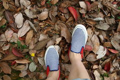 Feet in sneakers in Fallen leaves. Wearing a blue striped shoes and walk on the leaves Royalty Free Stock Photo