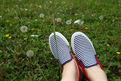 Feet in sneakers in green grass. Blue striped shoes in flower field Royalty Free Stock Image