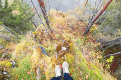 Feet sneakers walking on fall forest. Autumn season nature on background royalty free stock image
