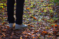 Feet sneakers walking on fall leaves. In autumn Stock Photography