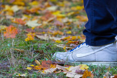 Feet sneakers walking on fall leaves. In autumn Royalty Free Stock Photography