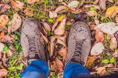 Feet sneakers walking on fall leaves in park with Autumn season Stock Photo