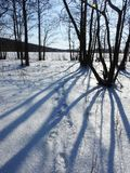 Beautiful winter forest, Lithuania Royalty Free Stock Photos
