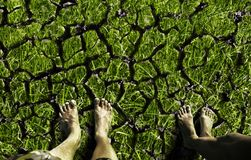 Feet standing on the cracked land Royalty Free Stock Photos