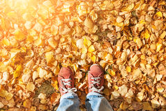Feet standing on fallen autumn leaves Royalty Free Stock Photo
