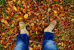 With the feet standing on leaves. Green grass, a forest in autumn, a forest in fall, branches with green leaves, branches with yellow leaves, yellow leaf Royalty Free Stock Photo