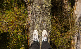 Feet standing on tree trunk Stock Image