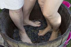 Feet stomping grapes Stock Photo