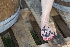 Feet stomping grapes Stock Image