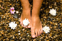 Feet on stones with flowers Stock Photos