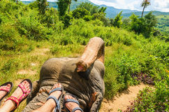Feet of two people on ephant 's head in jungle Royalty Free Stock Images