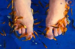 Feet undergo  peeling fish procedure  in aquarium Stock Image