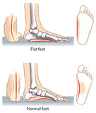 Feet. Vector illustration of flat and normal feet Stock Photography