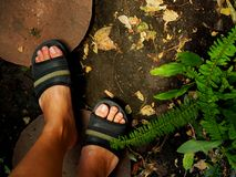 Feet walking on cement round tile, black soil, fern garden Stock Images