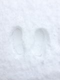 Feetprint in the snow. Footprint in the snow, feet print in the snow Royalty Free Stock Photography