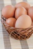 feg ägggnäggande för korg Royaltyfria Bilder
