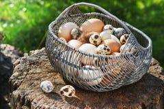 Fega ägg för vit och för brunt i en metallkorg i en trädgård på en stubbe Royaltyfri Foto