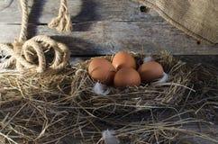 Fega ägg i den fega coopen Arkivfoto