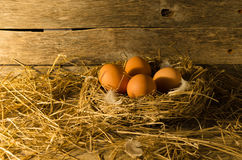 Fega ägg i den fega coopen Royaltyfri Bild